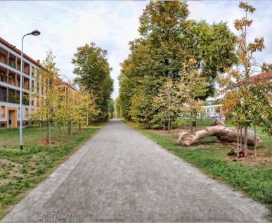 Parco Segantini-il viale dei tigli con il Tronco elemento fondante dell'Associazione
