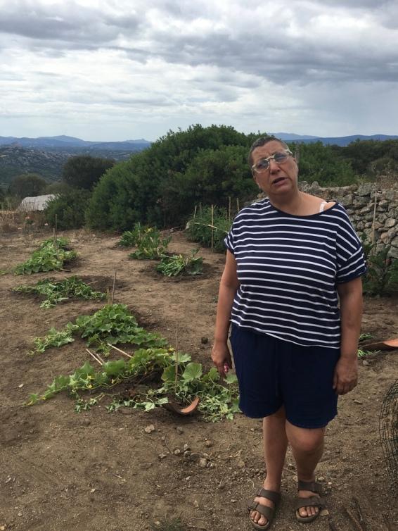 16 agosto 2016 – Stazzo Zirrulia, Orto. L'orto è stato devastato dai cinghiali. Piango le zucchine e i cetrioli. Qualcosa si è salvata. Ma quanto dolore. Eppoi che bomba sono?