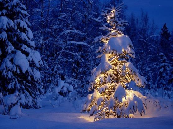 albero-con-neve-illuminato1